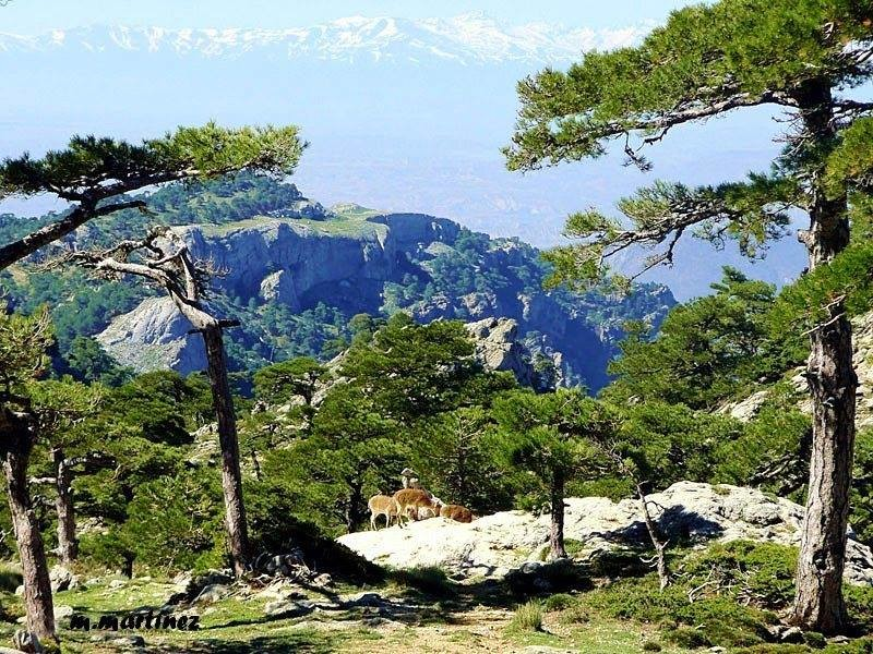 Pico Cabanas Sierra de Pozo
